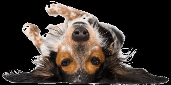 thinkdogstore