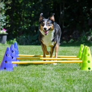 CANINE GYM AGILITY KIT - FITPAWS®